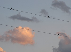 IMG_9025_birds on wireb