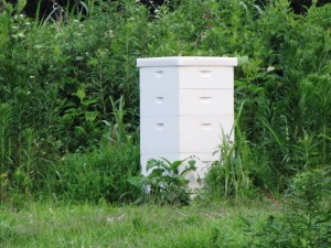 IMG_9246_bee hive