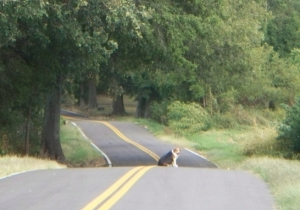 100_1261f_kat waiting for me to finish my walk_summer