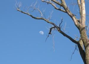 IMG_2400_moon