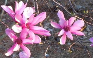 100_1239n_early spring