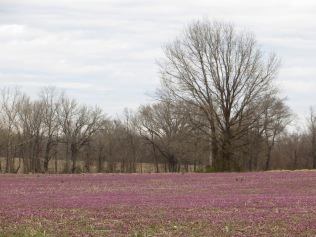 IMG_9213_purple fields