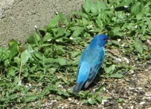 IMG_0838_splash of blue3