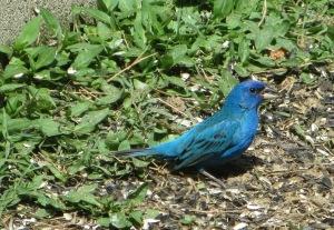 IMG_0840_a splash of blue4