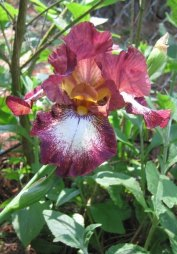 iris_wine and white_5-2005