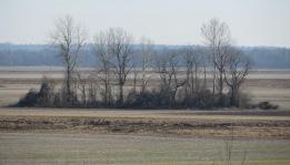 Landscape along the levee