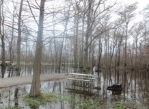 Flooded campground at Reelfoot Lake
