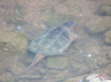 IMG_6407_turtle