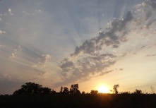 Sunbeams1