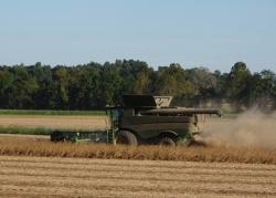 combine harvesting soybeans1