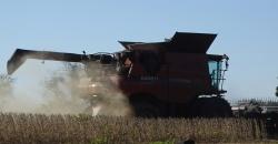 combine harvesting soybeans2