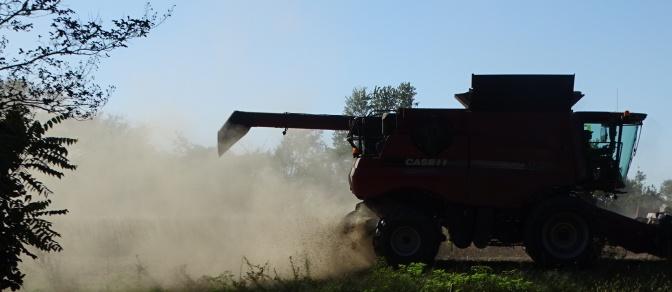 combine harvesting soybeans3