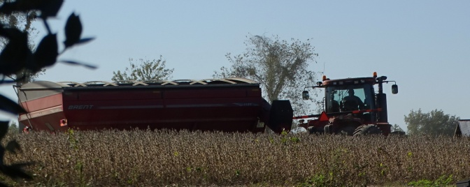 trailer for uploading harvested soybeans