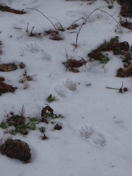 Animal tracks in the snow 4