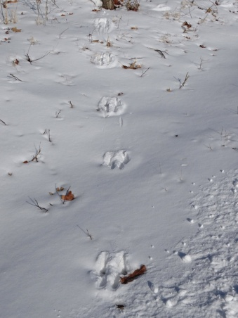 Animal tracks in the snow 5