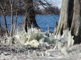 ice on the lake 4