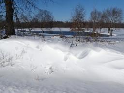 snowdrift 1