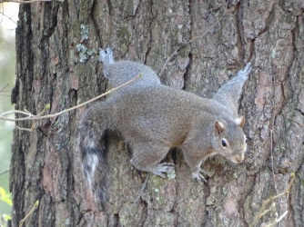 squirrel 10