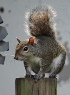 squirrel 5