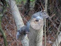 squirrel 7