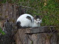Cat on a stump 2