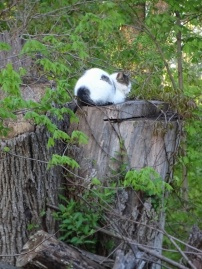 Cat on a stump