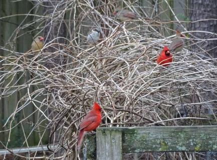 cardinals 10