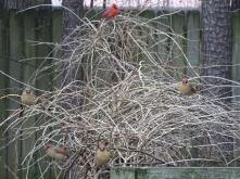 cardinals 8