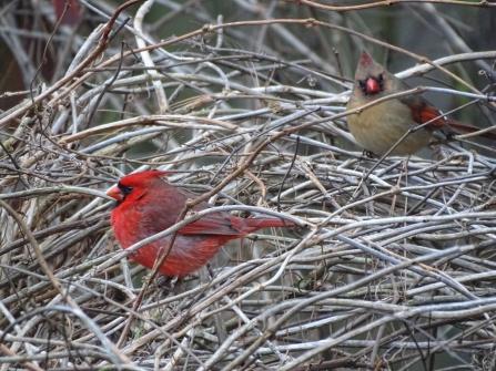 cardinals 9