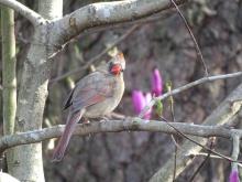 Cardinal 3
