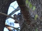 Squirrel 10
