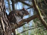 Squirrel 12