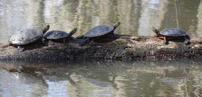 turtles 3