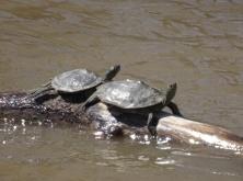turtles 6