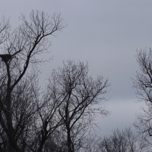 eagle watching over a nest 2