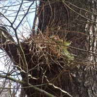 A Leaf Nest