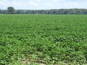 Farm field 2